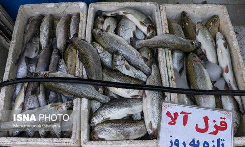 چرا ماهی گران شده است؟